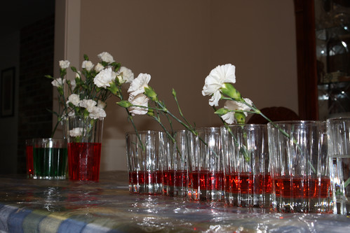 White Carnation/Food Coloring Experiment