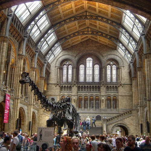 Tyrannosaurus rex in the Natural History Museum London