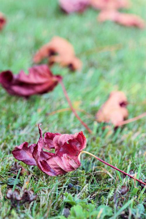 Autumn 5503 R