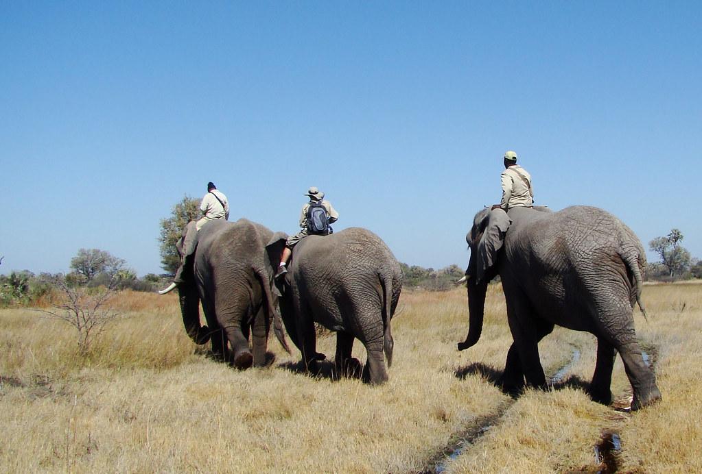 DSC08184 Elephant walk