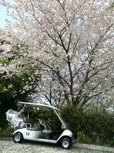 cart&sakura