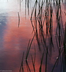 Sunset Reflections, Folsom, CA (Sudheendra Kadri) Tags: california longexposure blue sunset red sky color nature water grass silhouette northerncalifornia clouds reflections fire colorful mood folsom dramatic floating surface calm ripples sudhi smoothwater sudheendrakadri
