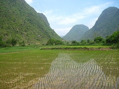 Ni soi gng (Mayxanh15) Tags: mountain field rice k15 dongbac