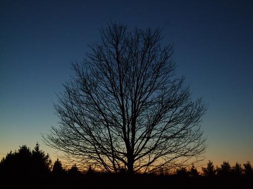 rest, dear tree
