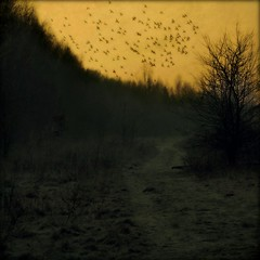 Coming back at home... (Bea Kotecka *Come back :) *) Tags: sunset birds scenery themoulinrouge winterscenery canoneos30d fivestarsgallery infinestyle winter2009 absolutelystunningscapes fragmentsofkantiandoctrine atqueartificia beakoteckaphotography topetra