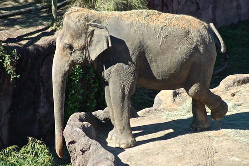Elephant from sky ride