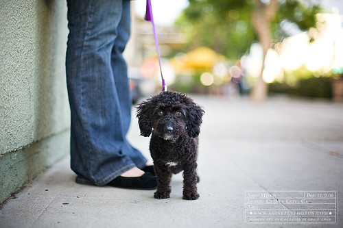 Los Angeles Dog Photographer