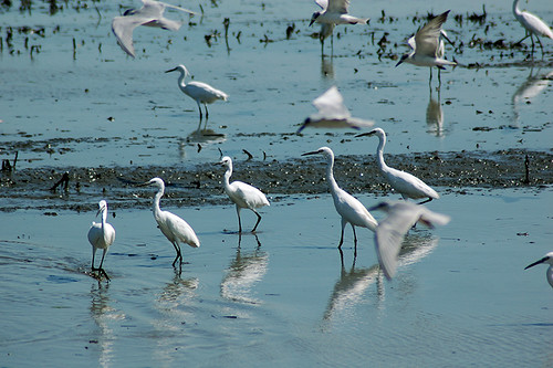 Egrets, Terns, and Egrets