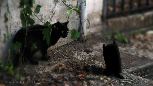 Que mira el gato?