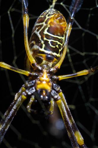 spider at glenrock