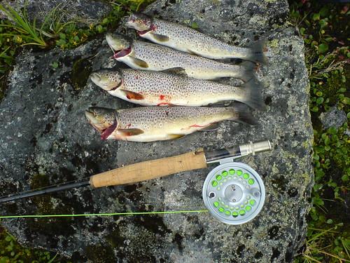 Børgefjell 2006 - Ørret på flue i Ranserelva