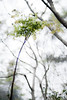 樹欲靜. (YENTHEN) Tags: tree bokeh hsinchu taiwan yenthen