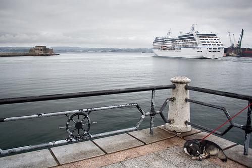 El trasatlántico, el perro y San Antón
