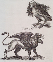 Bestiary Engraving Harpy and Griffin (griffinlb) Tags: illustration medieval myth bestiary mythical