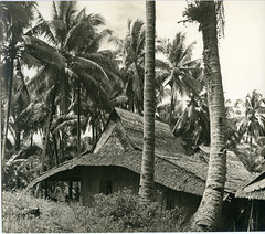Thatched house in village near South Loloda Bay