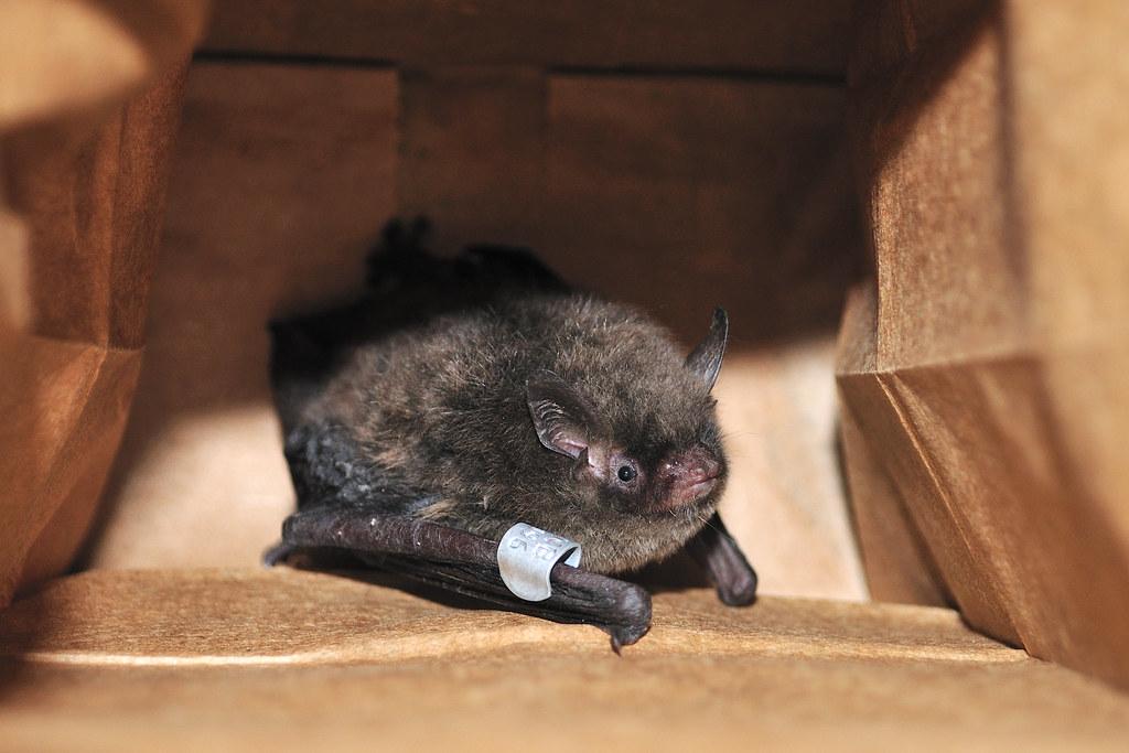Чем питается мыши в домашних условиях