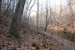 Northwest Branch (ellen  x silverberg) Tags: silverspring earlyspring nwb northwestbranch