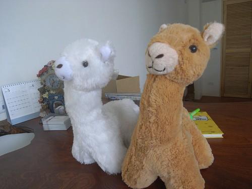 你拍攝的 7可愛的羊駝娃娃。
