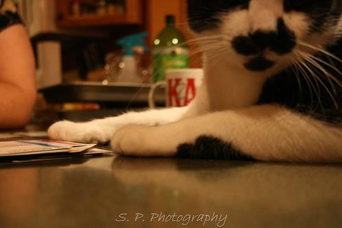Marcel the cat