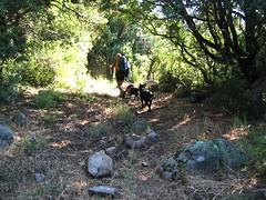 Sur le sentier de Naseu : la montée avec les deux chiens