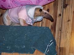 Under her hammock