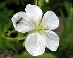 Flower/Insect