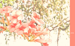 Where is my mind? (the pixies) (Sara ~ I?) Tags: pink flowers bright bokeh pastel pixie fiori pixies luce campanelle canzone