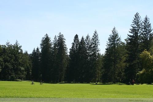suelo verde