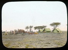 Fourth of July at Akeley's camp (The Field Museum Library) Tags: africa expedition fourthofjuly mammals somalia zoology 1896 carlakeley specimencollection dgelliot