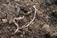 012 happy worms