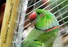 Bondhi Jibon (Johnny Chowdhury) Tags: bird beauty johnny bangladesh chittagong pakhi bondhijibon