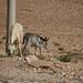Wadi Arabah, South Jordan 29/05/2011