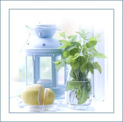 Lemon mint with lemon (haberlea) Tags: blue light white green ikea home glass yellow square lemon border frame lantern tealight lemonmint rotera