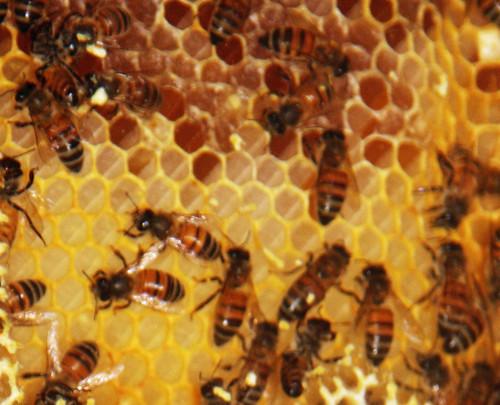 honey beehive