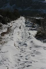 Rastros (Jos Carlos Cortizo Prez) Tags: nieve rastro