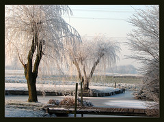 White ( Annieta  Off / On) Tags: trees winter white snow cold holland color nature netherlands dutch digital ilovenature frost hiver nederland thenetherlands natuur powershot s2is inspire polder paysbas canonpowershots2is 2009 soe couleur allrightsreserved januari pictureperfect canonpowershot koud zuidholland kleur vorst rijm krimpenerwaard rijp supershot annieta magicalworld abigfave shieldofexcellence diamondheart berkenwoude theunforgettablepictures betterthangood dragongoldaward ~newenvyofflickr~ dontusethisphotowithoutpermission usingthisphotowithoutpermissionisillegal mygearandme mygearandmepremium mygearandmebronze mygearandmesilver mygearandmegold mygearandmeplatinum