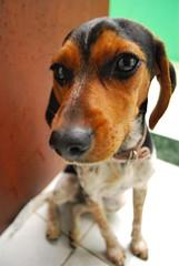 (Daniel Pascoal) Tags: dog cão public cachorro nikky danielpg danielpascoal