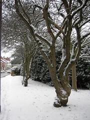 Delph Snow 16