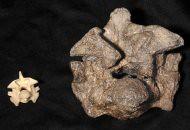 giant snake bones