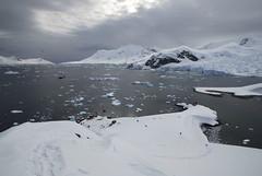 paradisebay3 (patfalvey) Tags: voyage irish students ushuaia penguins seals whales southgeorgia 2008 antarcticabeyondendurance southgerogiacrossing southgeorgiatraverse