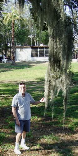 Spanish Moss - Grampi