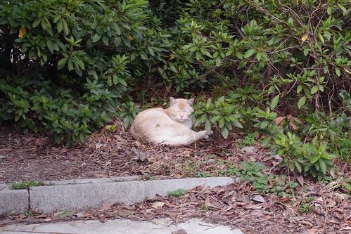 Today's Cat@20090222
