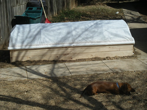 Raised Bed with Row Cover