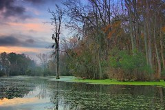 marsh reflection (Marc Crumpler (Ilikethenight)) Tags: morning trees usa clouds sunrise canon reflections landscape kayak southcarolina goosecreek tamron1750 40d canon40d vosplusbellesphotos flickrclassique