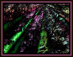 Gnome Woods (Molly258) Tags: abstractart visualarts outofthisworld moonseclipse citrit artistasshaman sharingart themodernimpressionists sensationalcreationsofexcellence empyreanart digitalartfx apretentioussystemofheteroducks impulsivecreations sweetmermaidsandbigsharks beautyofimagination tanjaandsonjaandfriends