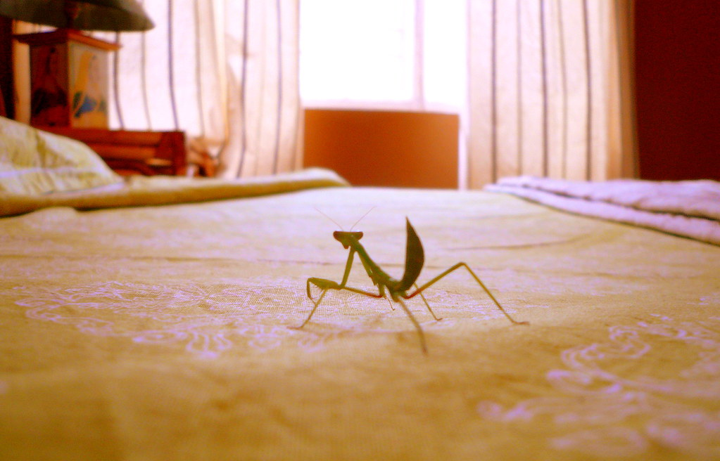 Mantis confrontation