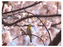 Cherry & Bird 090319 #03
