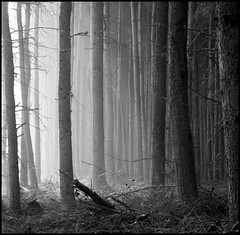 Trees (angus clyne) Tags: trees mist sunshine forest scotland blackwhite perthshire larch flikcr platinumphoto aplusphoto cleavendyke