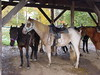 The Bark Eater Inn Riding Stables - Keene, NY (Guenther Lutz) Tags: 2001 horses usa october essexcounty sony cybershot impact northamerica newyorkstate northeast stable keene saddle lakeplacid adirondaks thebarkeaterinn