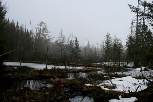 beaver ponds of Sprucedale